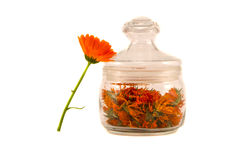 Glass jar with calendula dry flowers on white Stock Photography