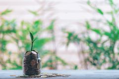 Glass jar with coins Plant seedlings stock photo