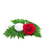 Glass jar of cream on fern leaves with red rose Stock Image