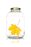 Glass jar with fallen leaf Stock Photo