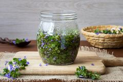 A glass jar filled with booming ground-ivy and honey Stock Image