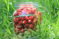 Glass jar with fresh ripe strawberries in a green grass Royalty Free Stock Photo