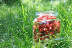 Glass jar with fresh ripe strawberries in a green grass Royalty Free Stock Photos