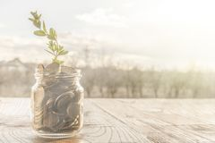 A glass jar full of golden coins and a growing plant stock photo