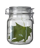 Glass jar kitchen dish green leaf Stock Photos
