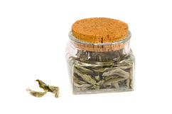 glass jar with mint herb tea Royalty Free Stock Image