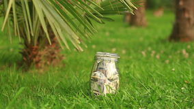 A glass jar with paper money dollars against a palm tree background. Accumulate savings on leave.  stock video footage