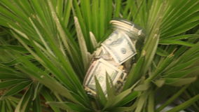 A glass jar with paper money dollars against a palm tree background. Accumulate savings on leave.  stock footage