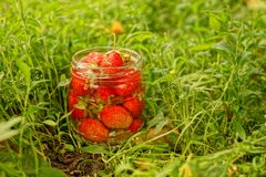 Glass jar with red strawberries among greens and grass Royalty Free Stock Images
