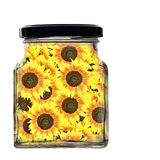 Glass jar of sunflowers, sunshine. Isolated on white. Stock Image
