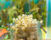 Glass Jar with white currant. Royalty Free Stock Photography