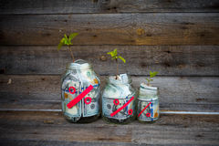Glass jars with money (dollars) from which the tree sprout grows. Royalty Free Stock Images