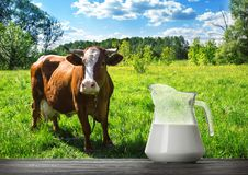 Glass jug with milk on wooden table with brown cow. Grazing on green meadow. Rural landscape summer Royalty Free Stock Image