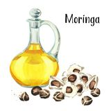 Glass jug of Moringa or Behen Oil, and seeds of the Moringa tree. Watercolor hand drawn illustration, isolated on white background.  royalty free stock photos