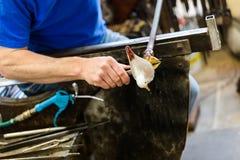 Glass konstnärarbeten på seagullskulptur som göras från varmt exponeringsglas Royaltyfria Bilder