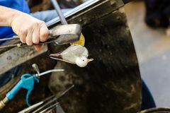 Glass konstnärarbeten på seagullskulptur som göras från varmt exponeringsglas Arkivfoton
