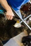 Glass konstnärarbeten på seagullskulptur som göras från varmt exponeringsglas Arkivbilder