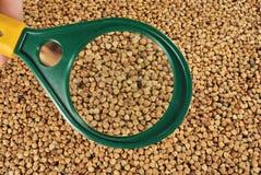 glass korn för bovete som under förstorar Royaltyfri Fotografi