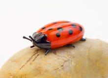 Glass ladybug on stone Stock Photos