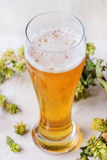 Glass of lager beer Stock Photography