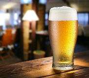 Glass of light beer on the bar counter. Glass of light beer on the glass bar counter Stock Images