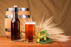 Glass of light beer and spikes of barley Stock Images