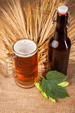 Glass of light beer and spikes of barley Stock Photo
