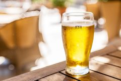 Glass of light beer on the wooden table royalty free stock images