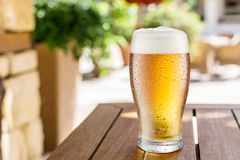 Glass of light beer on the wooden table royalty free stock photos