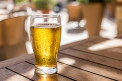 Glass of light beer on the wooden table royalty free stock image