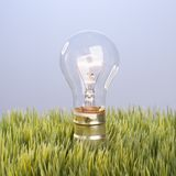 Glass light bulb in grass. Stock Photos