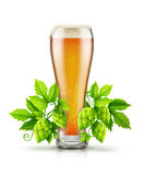 Glass of light lager beer with hop plant buds Royalty Free Stock Photography