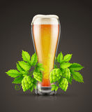 Glass of light lager beer with hop plant buds Stock Image