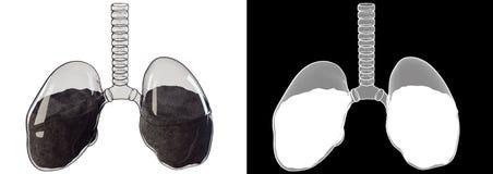 Glass lunga Fotografering för Bildbyråer