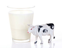 Glass of milk. A glass of milk next to a toy cow, isolated on white background Stock Image