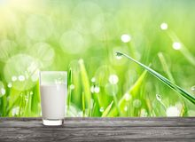 Glass of milk against background of grass under bright sun Royalty Free Stock Image