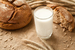 Glass of milk on background ears rye and bread. Stock Images