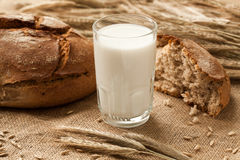 Glass of milk on background ears rye and bread. Stock Photo