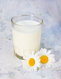 Glass with milk and camomiles a shabby wooden background Stock Image