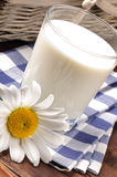 Glass of milk with daisy. On the wooden table royalty free stock image