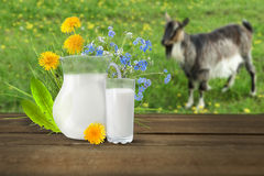 Glass of milk and goat Royalty Free Stock Images