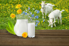 Glass of milk and goats Royalty Free Stock Photos