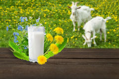 Glass of milk and goats Royalty Free Stock Photography