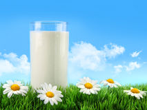 Glass of milk in the grass with daisies. And blue sky stock images