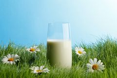 Glass of milk in grass with daisies Royalty Free Stock Image