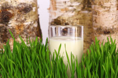 Glass of milk. On grass on natural background Royalty Free Stock Image