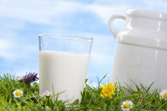 Glass of milk and milk jug on the grass. Stock Image