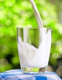 Glass of milk on nature background Royalty Free Stock Photography