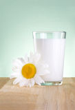 Glass milk and one chamomile is wooden table Royalty Free Stock Photo