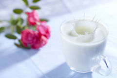 Glass of milk. Glass with splashed milk and rose on background Royalty Free Stock Photo
